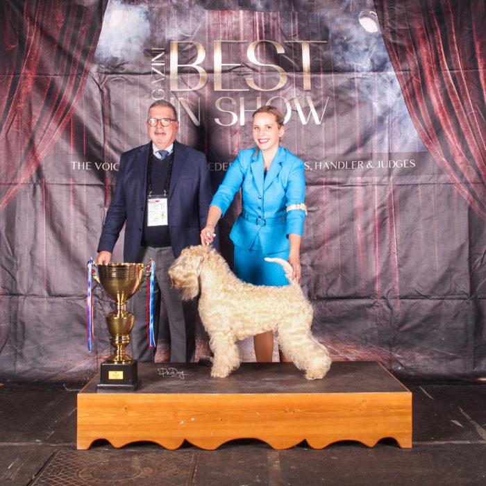 CACIB zagreb BIS winter classic wheaten terrier kni york