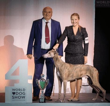 greyhound dog handling šubertová tereza