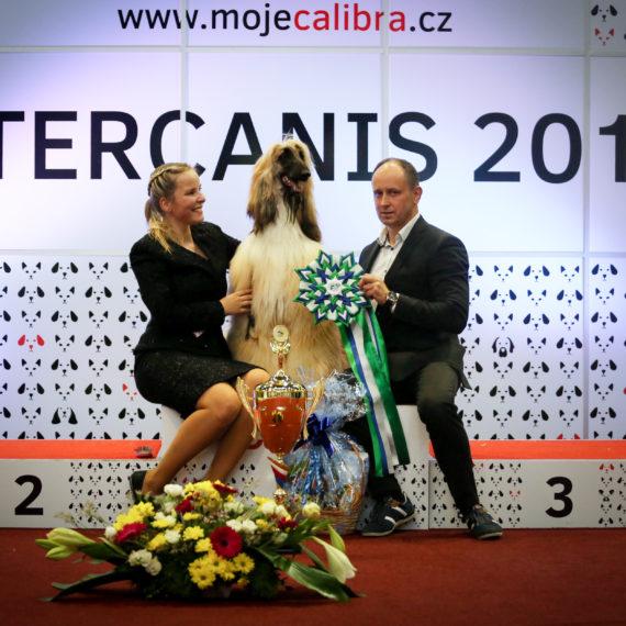 Intercanis Brno 2018