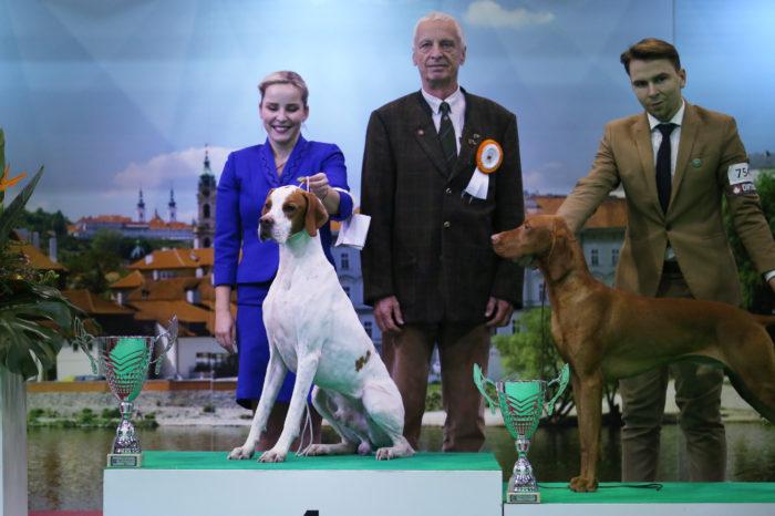 solivia's pointer world winner well well well winslow english šubertová tereza