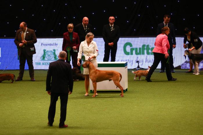 Crufts dog show rhodesian ridgeback best of breed 2019